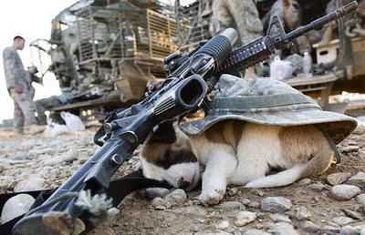 Cachorro dormindo durante a guerra do Iraque
