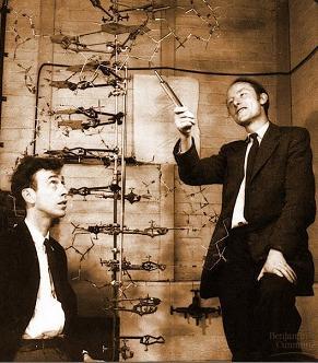 Watson e Crick - descobridores do DNA. A sua descoberta era tão complexa para a época que, após a publicação científica, os estudiosos demoraram mais de 1 mês para entendê-la